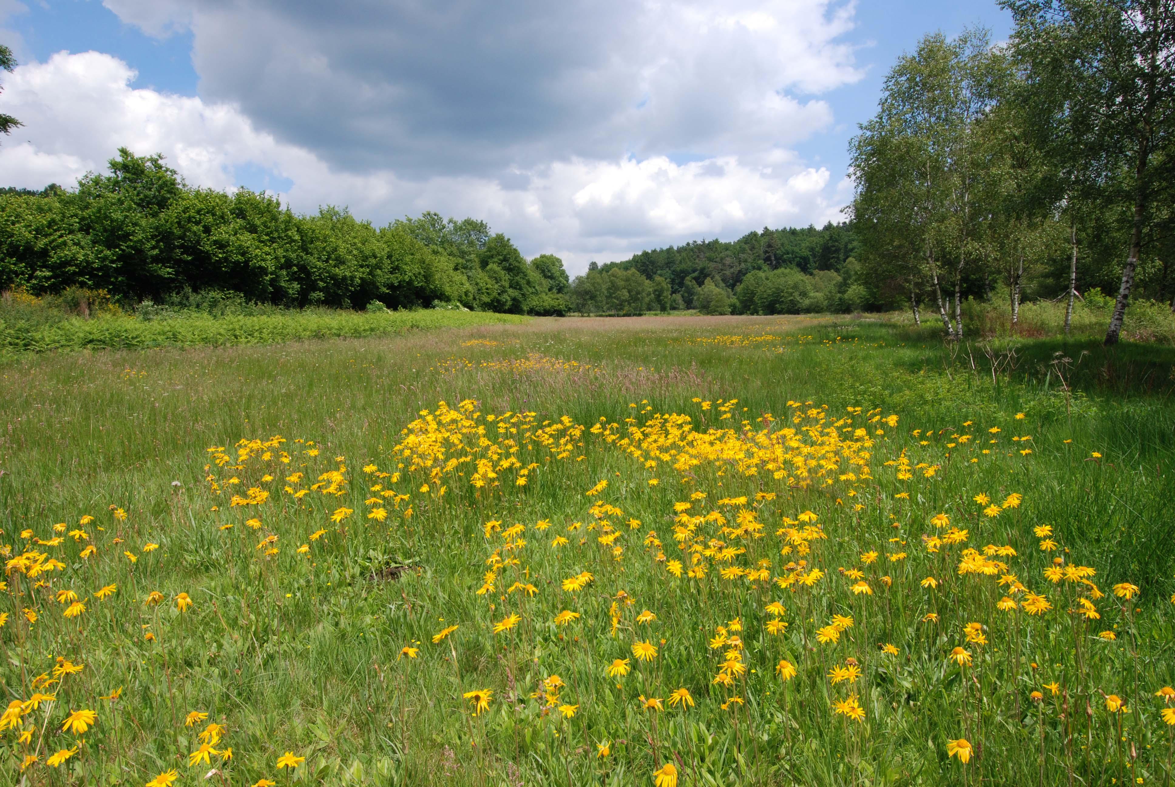 Alligny-58_Prairie-a-Arnica_O-Bardet_min