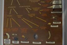 Clé d'identification des petites bêtes du sol_min