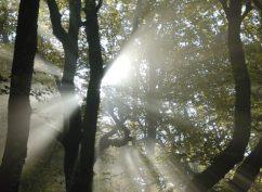 Le Vent sur l'arbre – Musique classique à Bibracte
