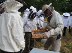Atelier «les ruchers du Parc du Morvan»