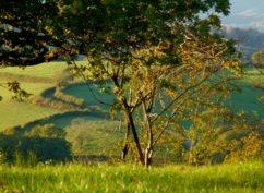 » Balade entre bois et rivières : la boucle de la Motte-Ternant» ENS2020
