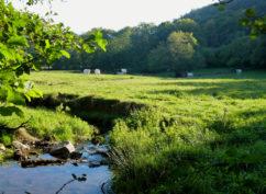 «Balade entre nature et culture : la ferme du Hameau»ENS2020