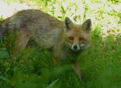 ATELIER NATURE: sur la piste des animaux de la forêt