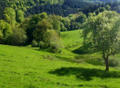 Balade nature: «à la découverte du Morvan»