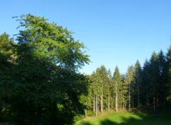 ATELIER NATURE «forêt par -ci par là, forêt dans tous ses états»