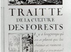 Vauban et la Forêt