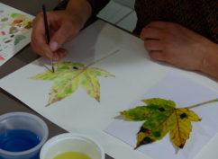 Stage d'illustration botanique «Couleurs d'automne, fruits et champignons»