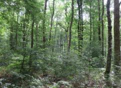 [Balade forestière] Biodiversité de nos forêts SUR INSCRIPTION UNIQUEMENT