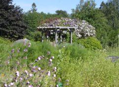Parc du Morvan / Visite de l'Herbularium