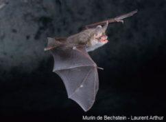 La faune nocturne du saut de Gouloux