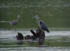 Balade crépusculaire au petit lac de Pannecières