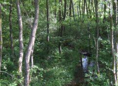 Fragile tourbière : à la découverte des sources de l'Yonne